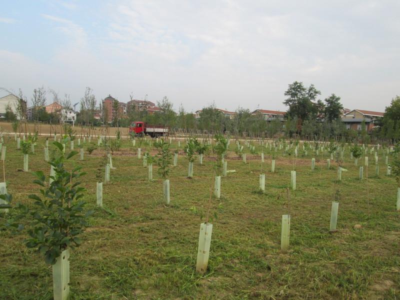 1 Imboschimenti forestali Grua nuovo impianto verde urbano