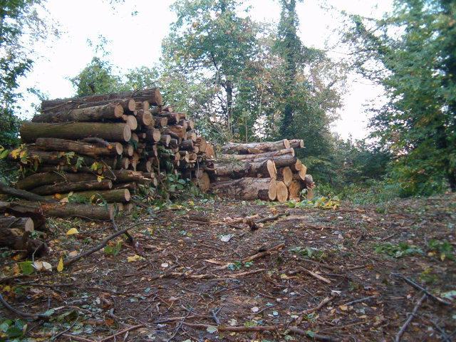 1 Tagli selettivi operazioni forestali Grua